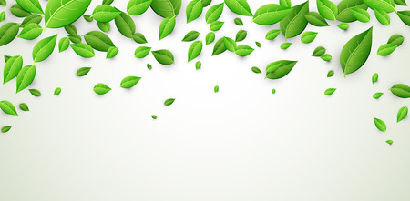 White banner with fresh green leaves. Vector paper illustration.