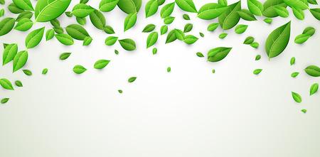 Witte banner met verse groene bladeren. Vector papier illustratie.