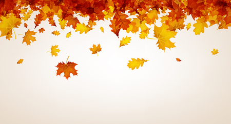 Autumn background with golden maple and oak leaves. Vector paper illustration. Illustration