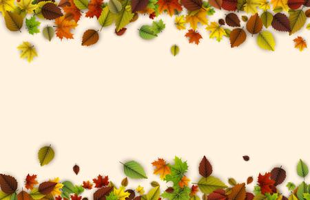 Herfst achtergrond met kleurrijke esdoorn en berken bladeren. Vector illustratie.