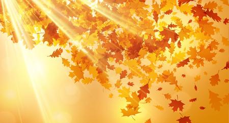 Glanzende herfst achtergrond met gouden esdoorn en eiken vallende bladeren. Stock Illustratie