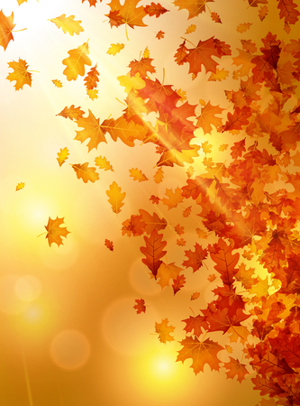Herfst achtergrond met gouden esdoorn en eikenbladeren. Stock Illustratie