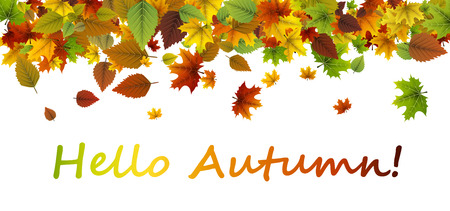 White hello autumn banner with colorful leaves. Illustration