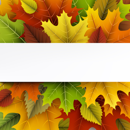 Herfst met kleurrijke esdoorn en berken bladeren. Stockfoto - 85418037