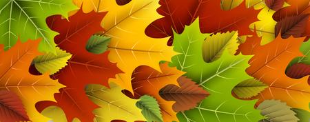 Herfst banner met kleurrijke esdoorn en berken bladeren.