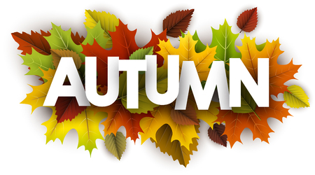 White autumn banner with colorful maple and birch leaves. Vector illustration.