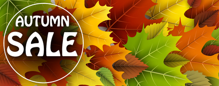 Autumn sale banner with colorful maple and birch leaves. Vector illustration. Illustration