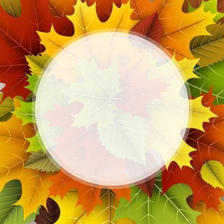 De herfst om achtergrond met kleurrijke esdoorn en berkbladeren. Vector illustratie.