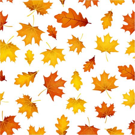 Witte herfst achtergrond met gouden esdoorn en eikenbladeren patroon. Vector illustratie.