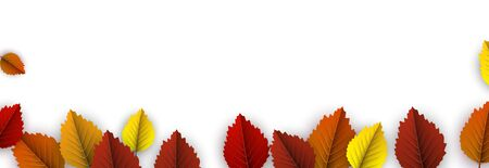Autumn horizontal banner with beautiful colorful birch leaves on white. Season decoration - Vector