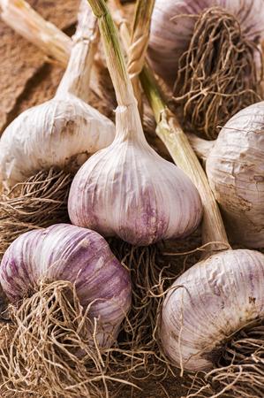 Bunch of fresh garlic on a stone Stock Photo