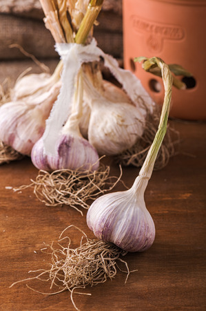 Bunch of fresh garlic on the table
