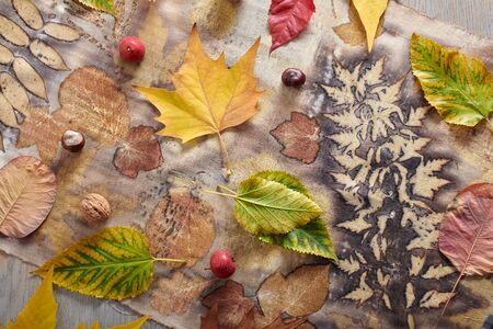Autumn leaves, nuts and berries lying on hand-dyed fabric strip using eco-print technique