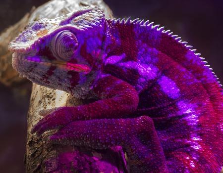Portrait of Reptile in profile, texture mesh rough skin, skin color green, orange, brown, orange ridge of skin on the head.
