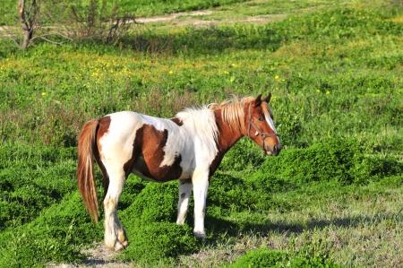 dappled: Dappled horse - campaigns Taranto