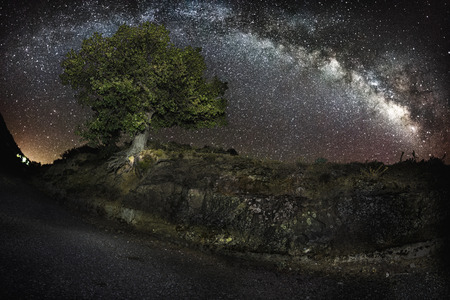 spectral: Spectral Tree and Milky Way