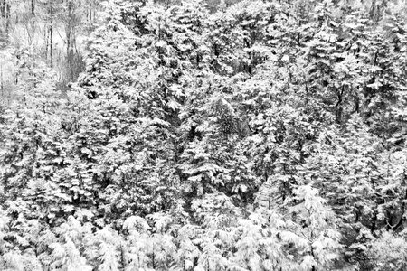 Aerial view of trees covered by snow in a forest, on the side of Subasio mountain (Umbria), creating a kind of abstract texture Фото со стока
