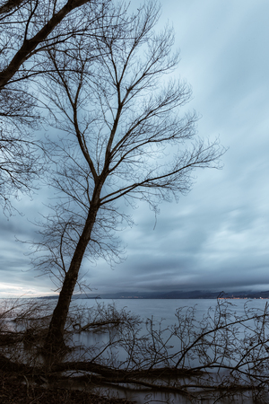 Skeletal and fallen trees on a lake shore, beneath a moody sky
