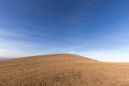 A distant, loney tree on a bare hill, beneath a blue sky with white clouds
