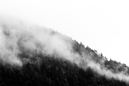 Trees on a mountain almost covered by fog Stock Photo