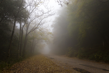A country road in the fog, with trees at the sides and fallen le Stock Photo