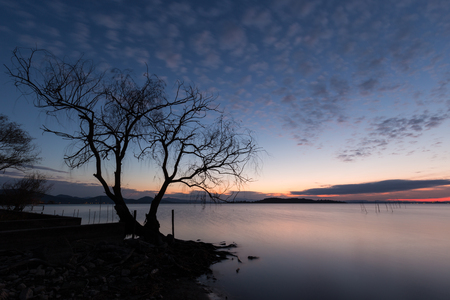 Beautiful view of a lake at dusk, with a tree in the foreground,