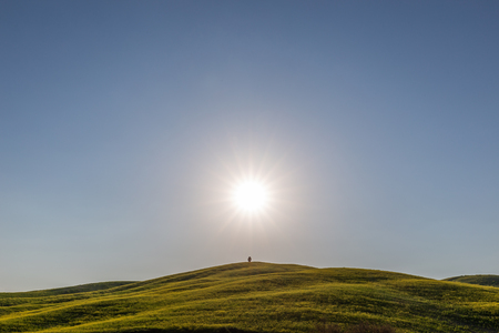 Typical Tuscany (Val dOrcia) landscape, with an isolated cypress tree on a hill in the middle of green grass and sun at the center of the frame