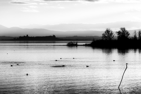 Beautiful view of Trasimeno lake at sunset with birds on water, trees and Castiglione del Lago town in the background