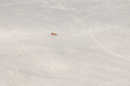 A dog running over a mountain field covered by snow Imagens