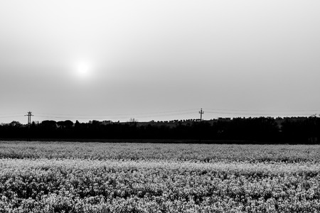 Sunset over cultivated fields with flowers Stock Photo