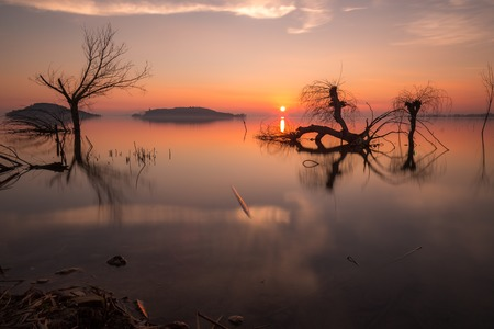 Beautiful sunset at Trasimeno lake (Umbria), with perfectly still water, skeletal trees and beautiful warm colors