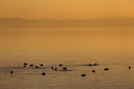 Beautiful view of a lake at sunset, with orange tones and birds on water