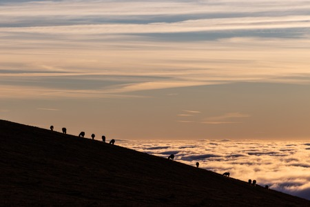Horses silhouettes on a mountain over a sea of fog at sunset, with beautiful warm colors.