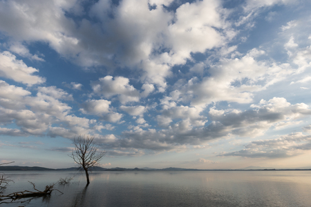 Beautiful wide angle view of a lake with an huge sky with clouds above skeletal trees
