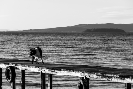 A dog on a pier over a a lake