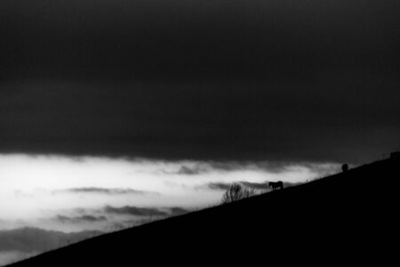 Distant horses silhouettes over a mountains against a beautiful sky at dusk.