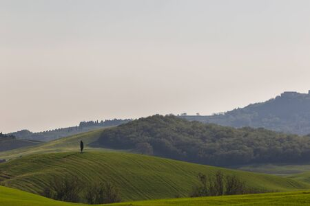 Beautiful Tuscany landscape in spring time with wave green hills and isolated cypress. Tuscany, Italy, Europe Stockfoto