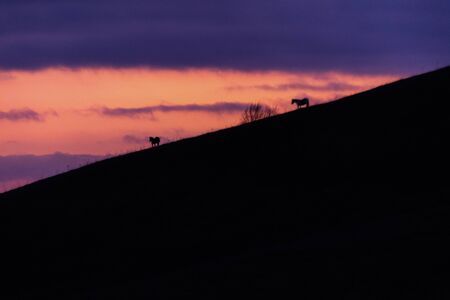 Distant horses silhouettes over a mountains against a beautiful coloured sky at dusk