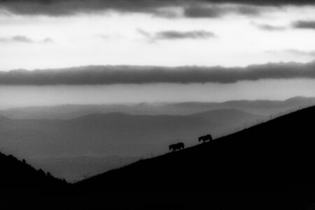 Distant horses silhouettes over a mountains against a beautiful sky at dusk