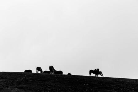 Horses silhouettes over a mountain