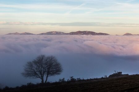 A tree silhouette above a sea of fog and mountains with snow at the distance