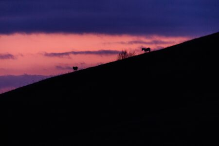 Distant horses silhouettes over a mountains against a beautiful coloured sky at dusk. Stok Fotoğraf
