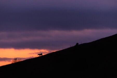 Distant horses silhouettes over a mountains against a beautiful coloured sky at dusk. Imagens