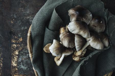 Mushroom on rustic background