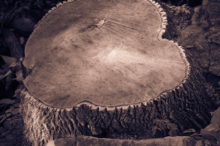 Tree stump-cut wood