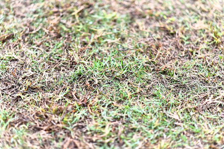 faded: close up of faded grass field