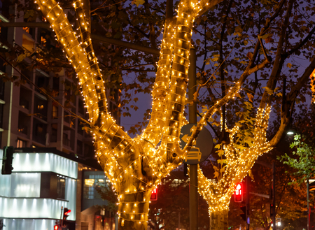 christmas in denver: Christmas decoration lights on trees Stock Photo