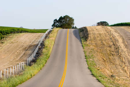 wine road: Road running through a California vineyard  Stock Photo