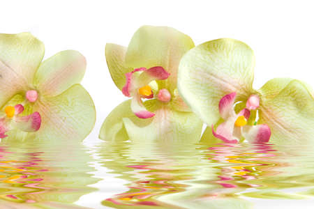 reflection: Green orchid flower in water Stock Photo