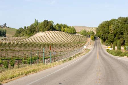 wine road: California vineyard landscape